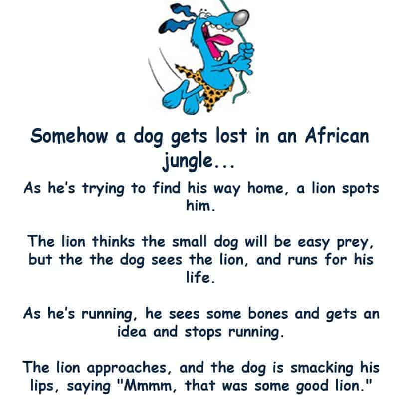 A dog gets lost in the jungle and has to use his wits to survive - funny joke