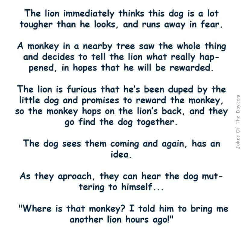 Somehow a dog gets lost in an African jungle. As he is finding his way a lion spots him. The lion thinks since the dog is so small... -funny joke