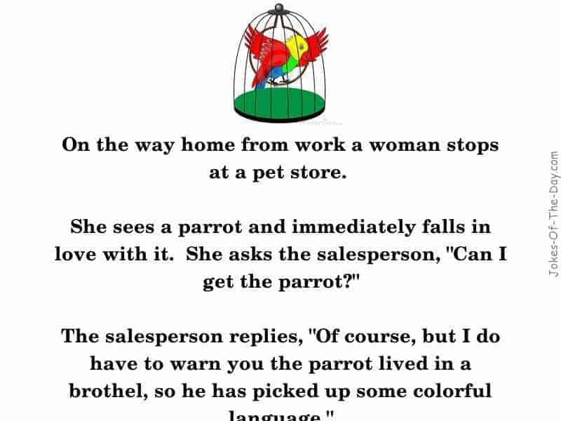 A woman buys a talking parrot from a brothel