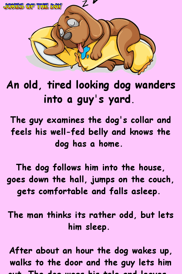 Funny Clean Joke - An old tired looking dog wanders into a guy's yard