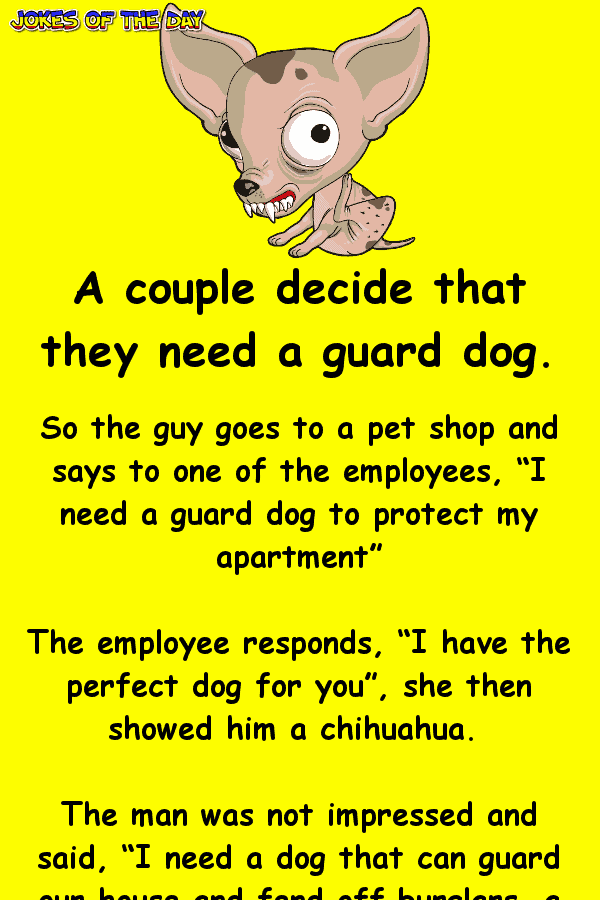 Funny Joke - He went to buy a guard dog, but his wife was angry when he returned with a chihuahua