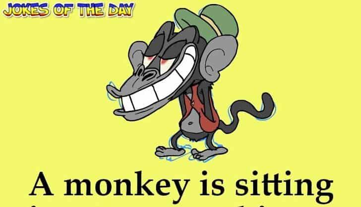 Joke - A monkey is sitting in a tree smoking a joint