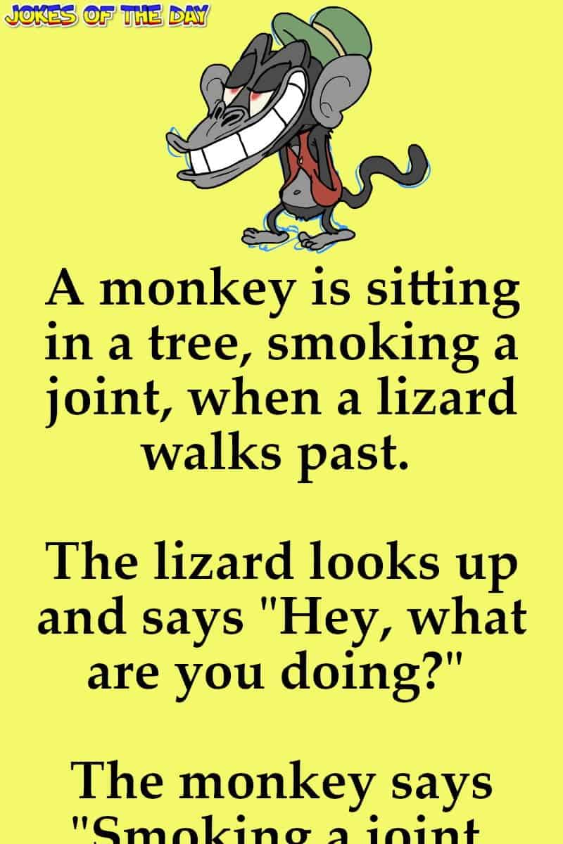 Funny: A monkey is sitting in a tree, smoking a joint